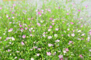 border planten laag